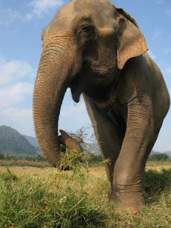 autobiography of an elephant Our reading guide for the elephant whisperer by lawrence anthony includes book club discussion questions, book reviews, plot summary-synopsis and author bio.