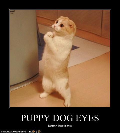 Cute Please Animal Meme wallpapers