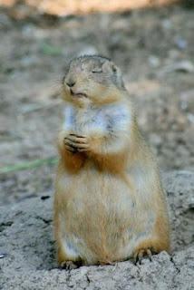 Prairie Dog Praying--Photo from Parade Magazine