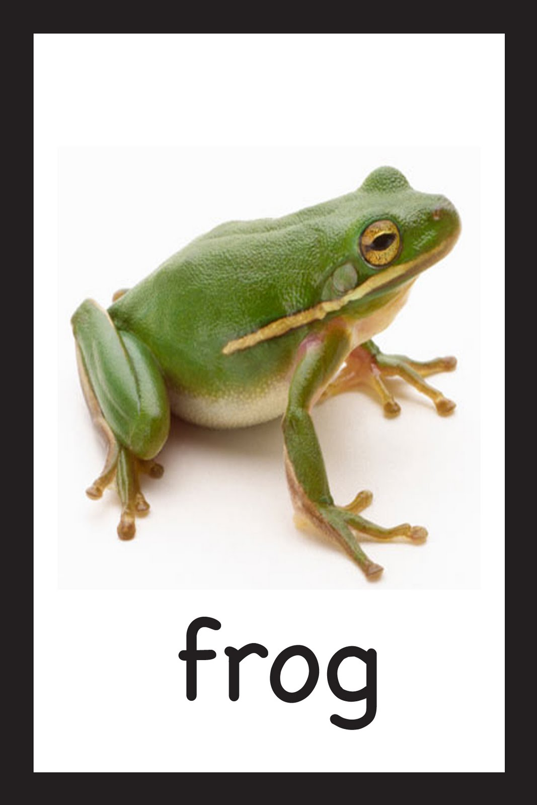 [frog]