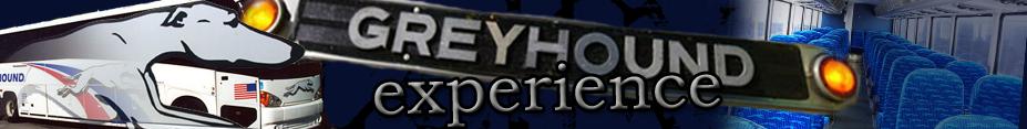 greyhound experience
