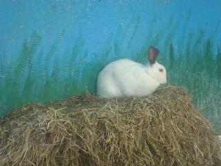 [rabbit]