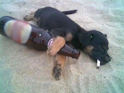 Deem os nomes Cachorro-bebado-na-praia