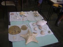 aula:equinodermos e moluscos