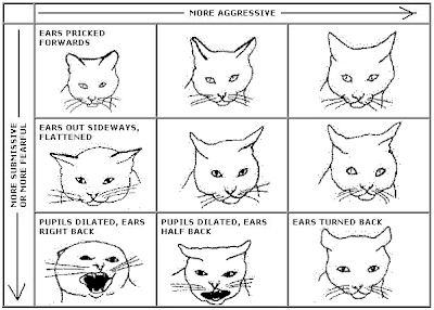 Cat Facial Expressions And What They Mean
