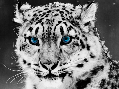 black and white pictures of animals. Cute Funny Animal cute animals