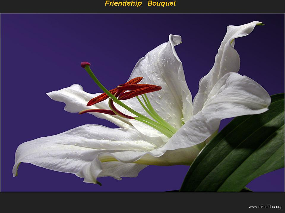 friendship bouquet images free download background