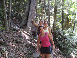 Rainforest Hike on Fraser Island
