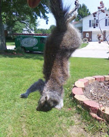 squirrel flipping