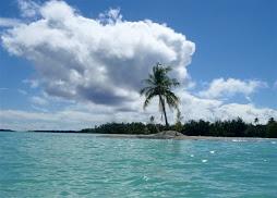 one coconut island