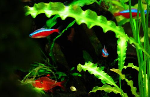 Proyectos mdl universidad cooperativa de colombia repsol for Manual de peces ornamentales
