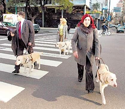 Raza de perros Bichon Frisé - Razas de Perros y Gatos