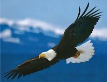 O Senhor te fará voar alturas inimagináveis