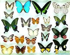 快变蝴蝶吧..