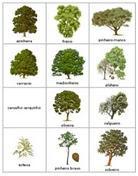 Conhecer as árvores