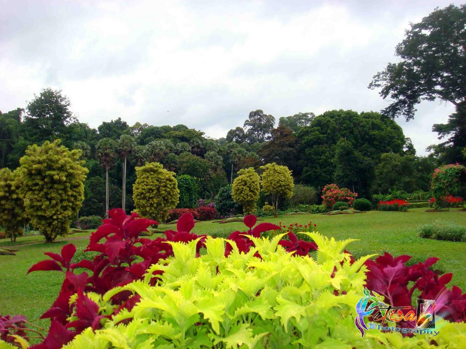 Artisan peradeniya flower garden for Flowers landscape gardening