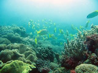 let us dive into the depths