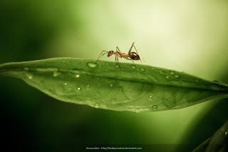 Gambar semut di atas daun