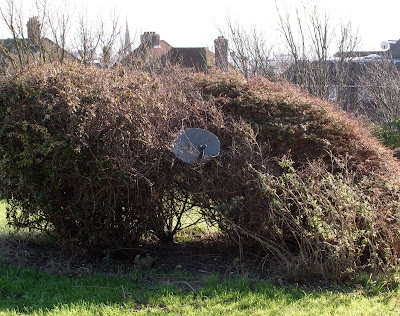 Bush Satellite Dish