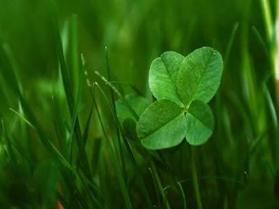 Viridis gazon pelouse vers blancs - Combien de temps pousse le gazon ...