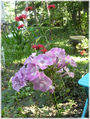 The tall garden phlox are now