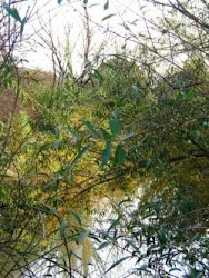 El río a través del follaje