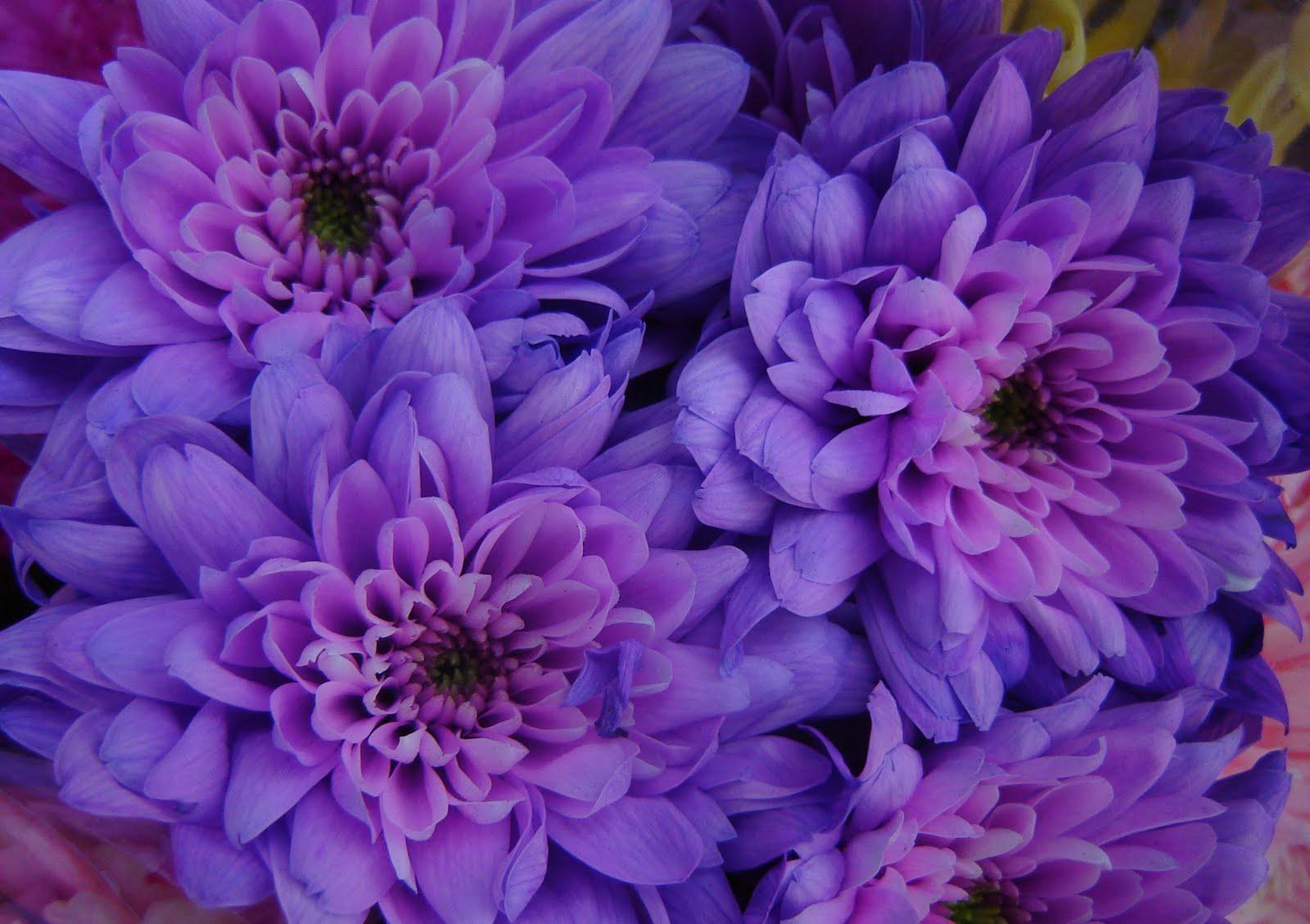 July Birthday Flower Choice Image Flower Wallpaper Hd