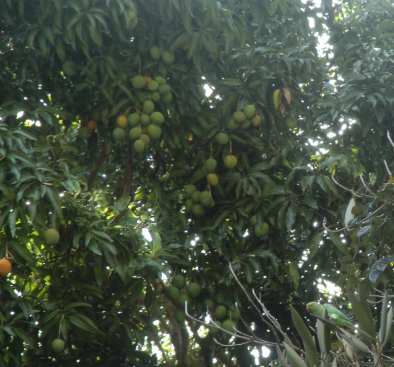 [Mango+w+Parrot.png]