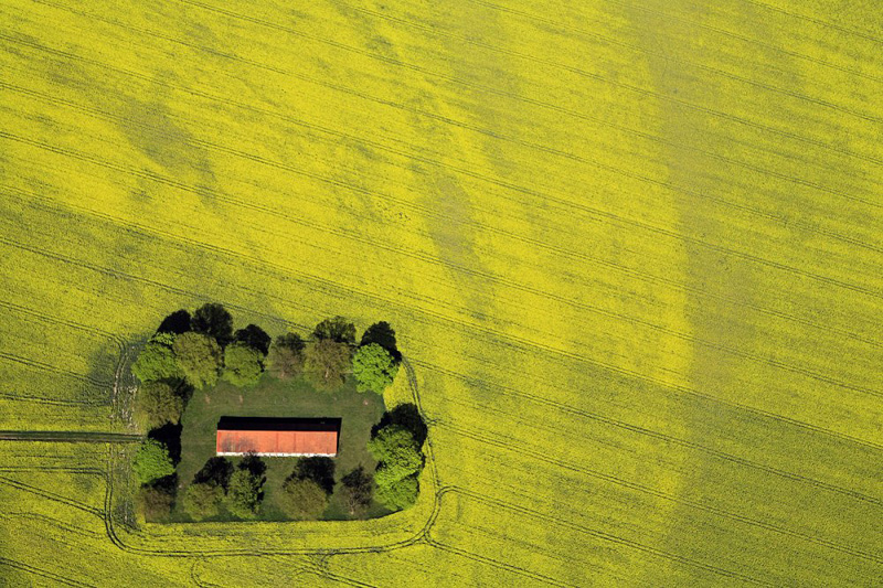 House in a rapeseed field