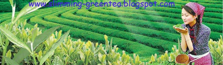 Slimming, green tea,century eastern, pusat stokis mangga dua
