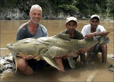巨型魚怪 - 坦克鴨嘴魚 (Goonch Catfish)