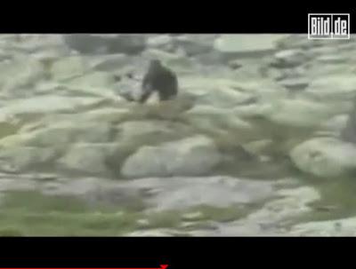 美國 大腳怪 - 波蘭猿人 外型酷似美國 大腳怪