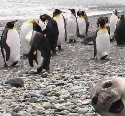 2010十大最受歡迎動物照
