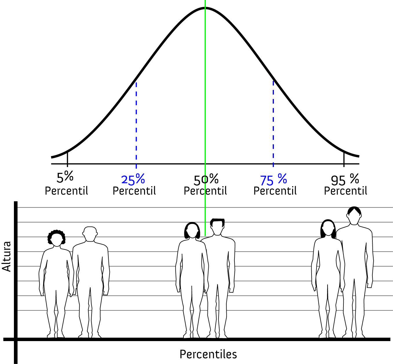 Breve introducci n a la antropometr a f sica for Cuales son medidas antropometricas