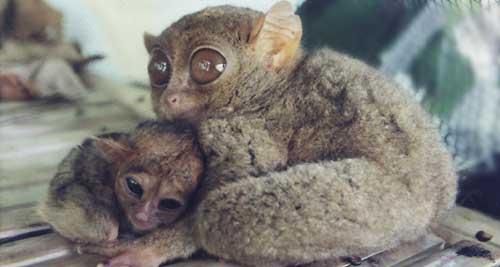 http://3.bp.blogspot.com/_Hbo7Ung0Hbg/S-XcvG9jtmI/AAAAAAAABSI/HwRAw9ydb8Y/s1600/Baby+tarsier.jpg