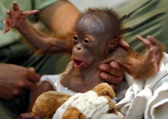 http://3.bp.blogspot.com/_Hbo7Ung0Hbg/TRe1Ej6hslI/AAAAAAAABe4/ZyHUvgTyRk4/s1600/happy-monkey.jpg