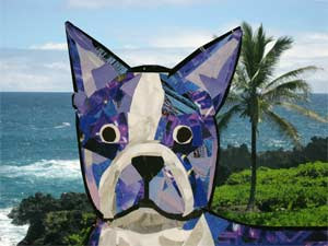 Bosty goes to Hawaii by Megan Coyle