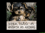 Pedido Animal