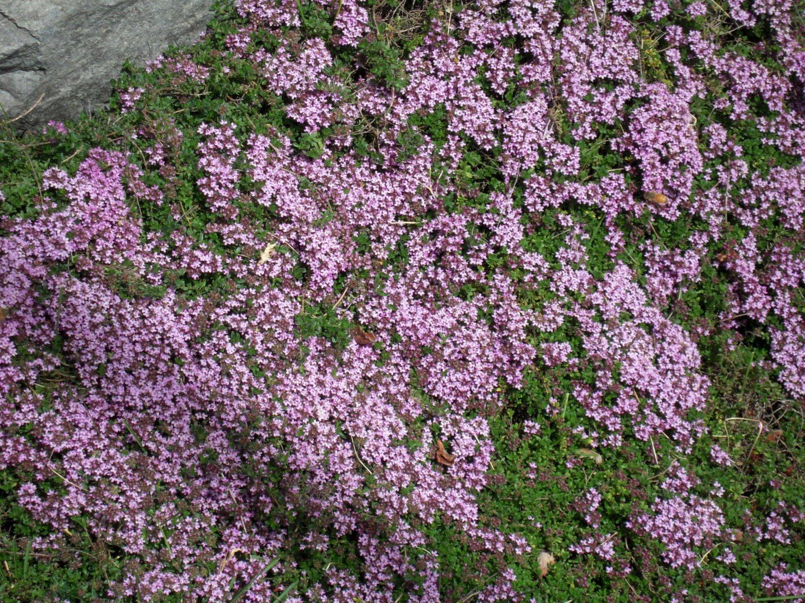 Hortus Urbanus May Blooms