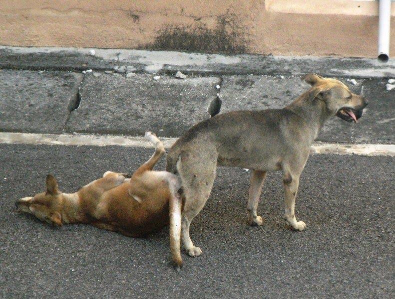 Dog Breeding Videos - Dog Training Home | Dog Types
