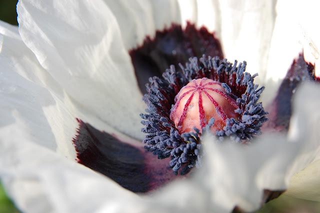 Naturbilder blommor landskap blad