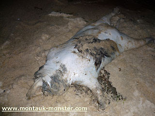 montauk monster long island monster