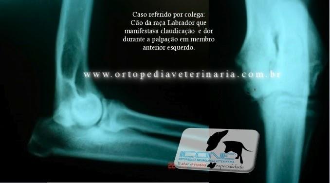 Icone ortopedia e neurocirurgia veterin ria for W de porter ortopedia