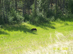 First of many bears we saw near the road
