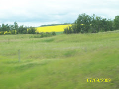 the fields of canola were beautiful