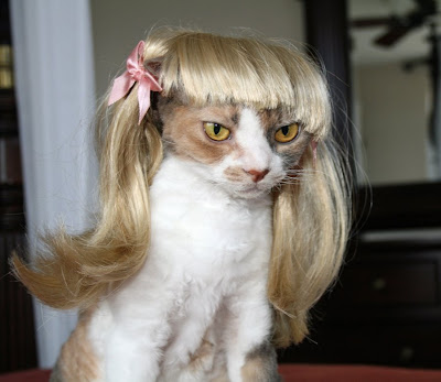 http://3.bp.blogspot.com/_HhUjJ73jZso/SD3VVEUj-zI/AAAAAAAAFRU/L1nPsW8J-HQ/s400/bad+hair6.jpg