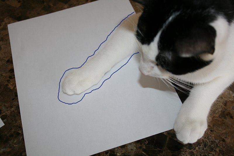 [Paw+doodles5.jpg]