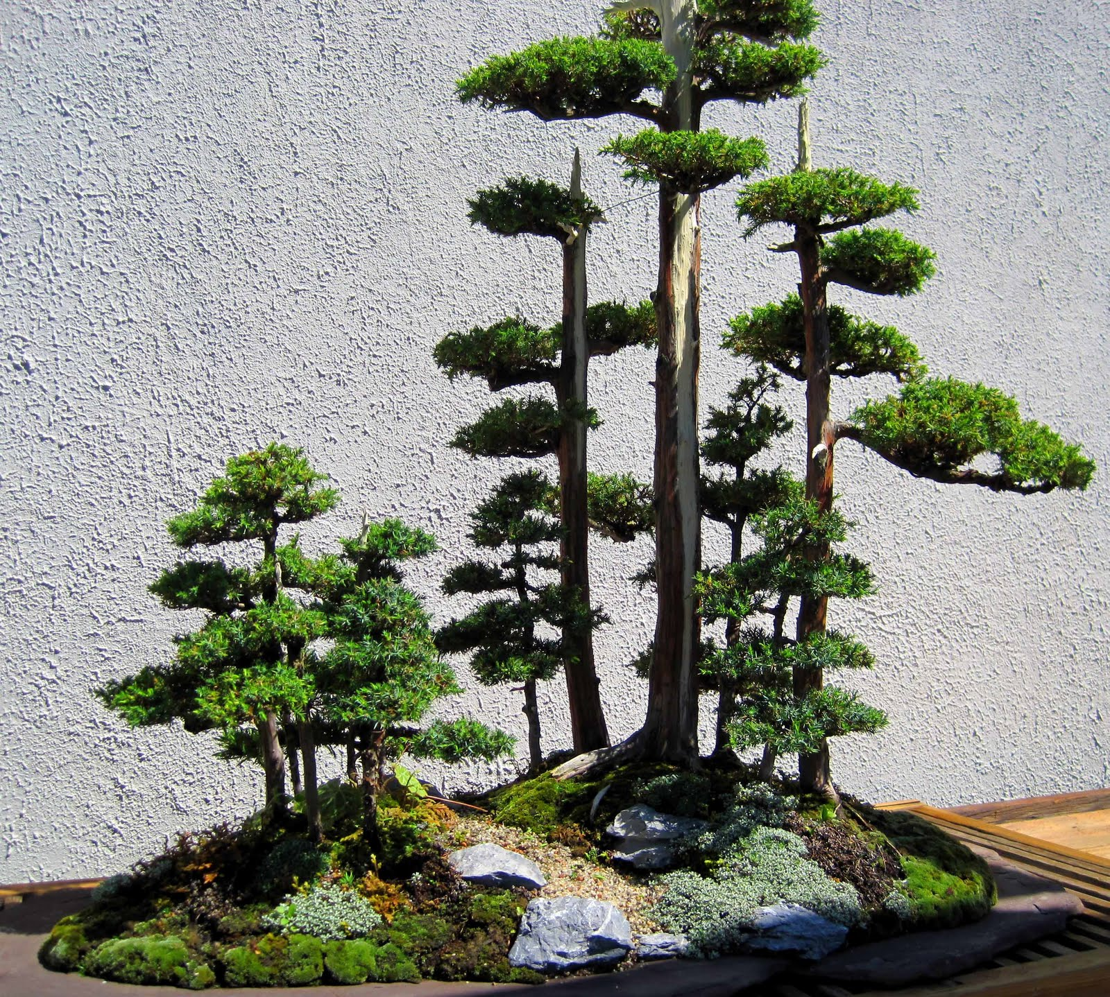 bonsai+forest.jpg