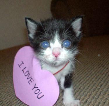 I LOVE YOU >o<!!