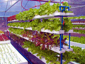 Space news could space farmers grow crops on for Soil less farming